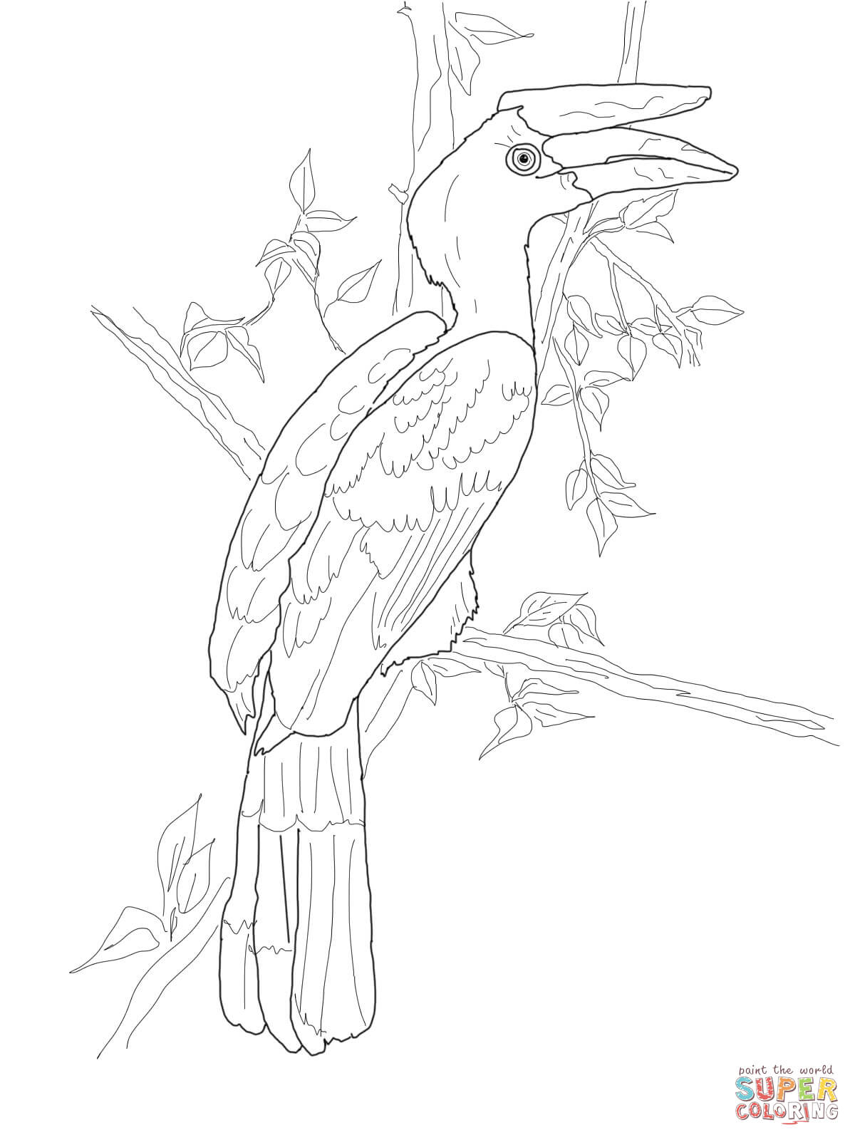 Hornbill coloring #16, Download drawings