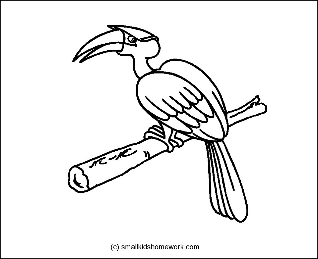 Hornbill coloring Download Hornbill