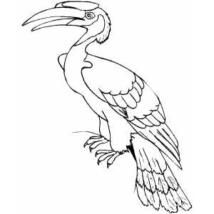 Hornbill coloring #8, Download drawings