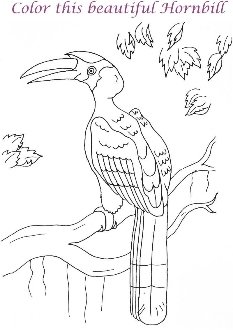 Hornbill coloring #11, Download drawings