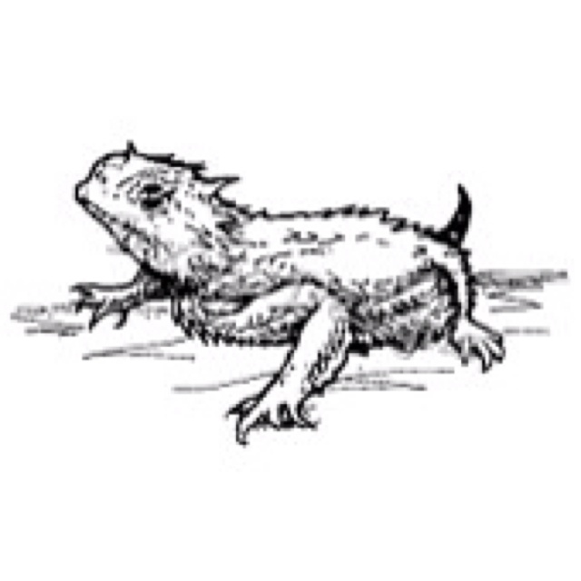 Horned Lizard clipart #16, Download drawings