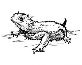 Horned Lizard clipart #2, Download drawings