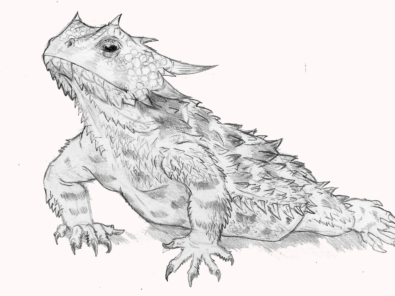 Horned Lizard clipart #14, Download drawings