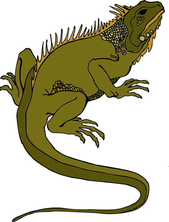 Marine Iguana clipart #6, Download drawings