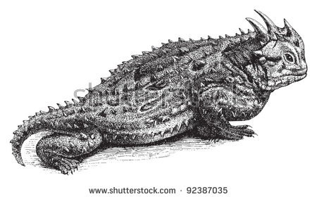 Horned Lizard clipart #5, Download drawings