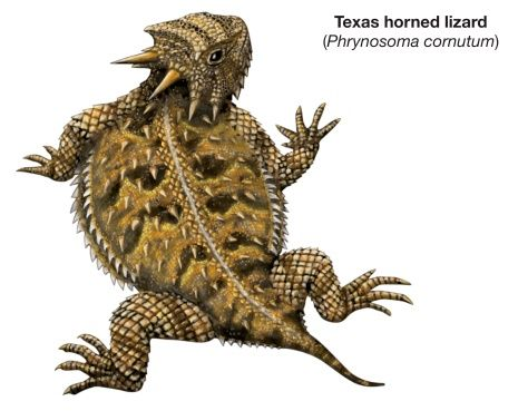 Horned Lizard clipart #9, Download drawings