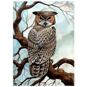 Horned Owl clipart #7, Download drawings