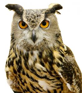 Horned Owl clipart #5, Download drawings