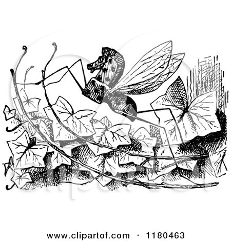 Horse-fly clipart #5, Download drawings