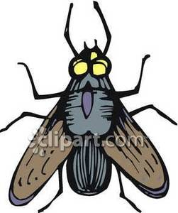 Horse-fly clipart #16, Download drawings