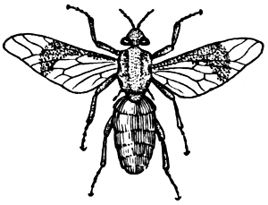 Horse-fly clipart #10, Download drawings