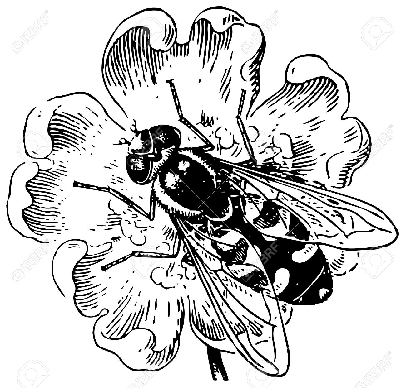Hoverfly clipart #2, Download drawings