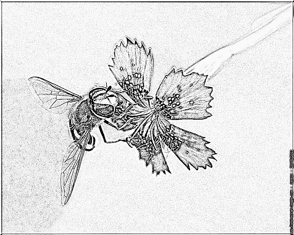 Hoverfly coloring #9, Download drawings