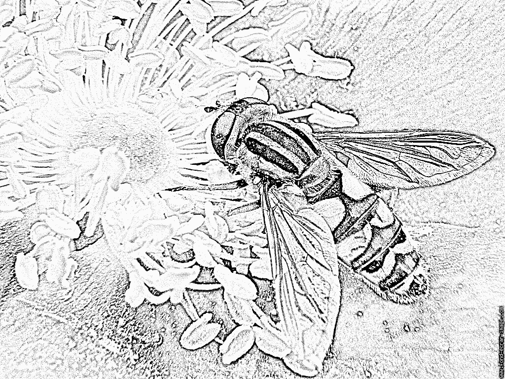 Hoverfly coloring #11, Download drawings