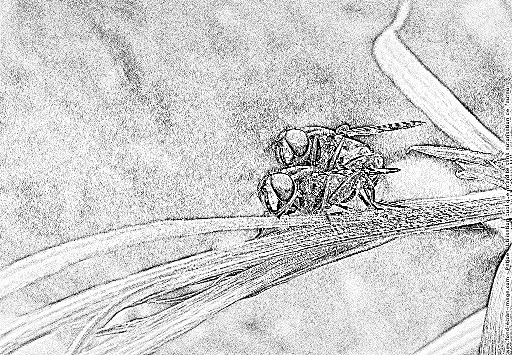 Hoverfly coloring #17, Download drawings