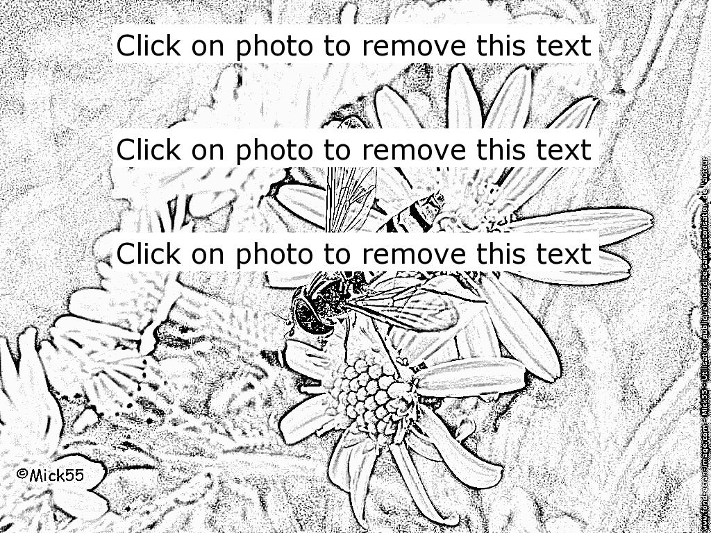 Hoverfly coloring #16, Download drawings