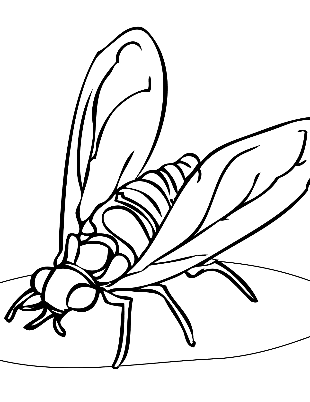 Hoverfly coloring #10, Download drawings