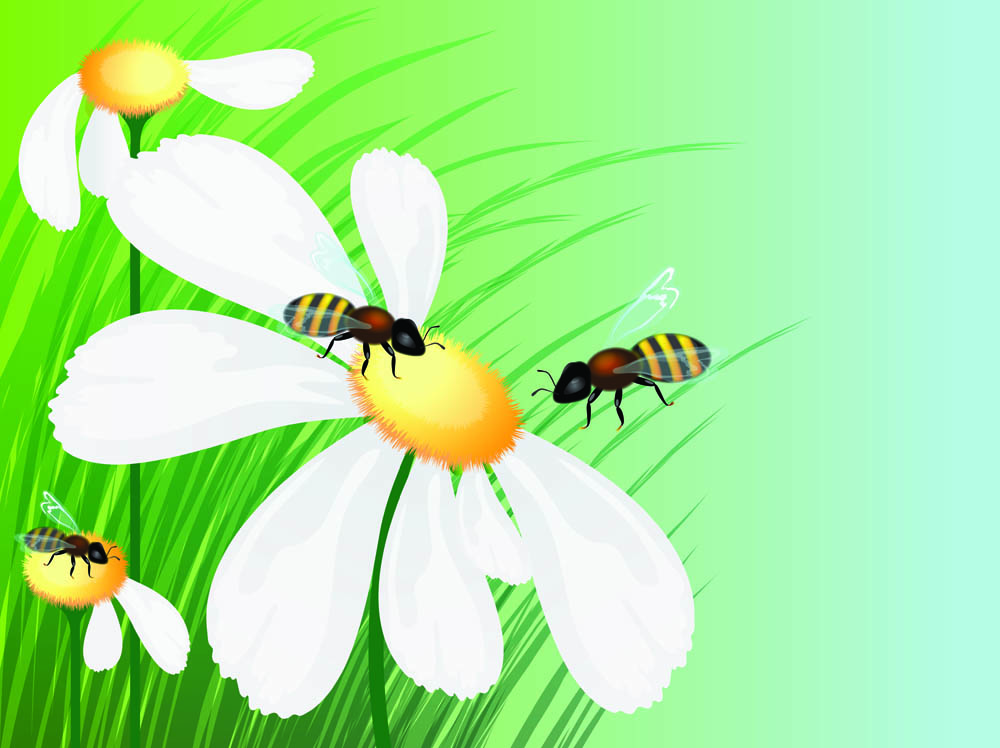 Hoverfly svg #13, Download drawings