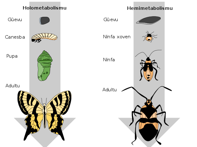 Hoverfly svg #9, Download drawings