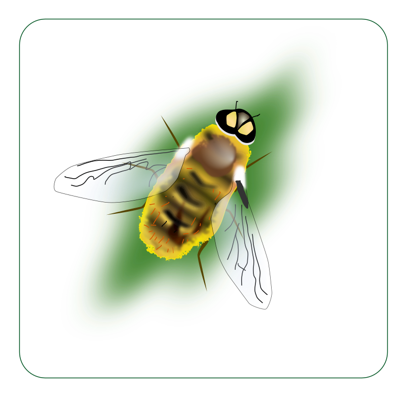 Hoverfly svg #16, Download drawings