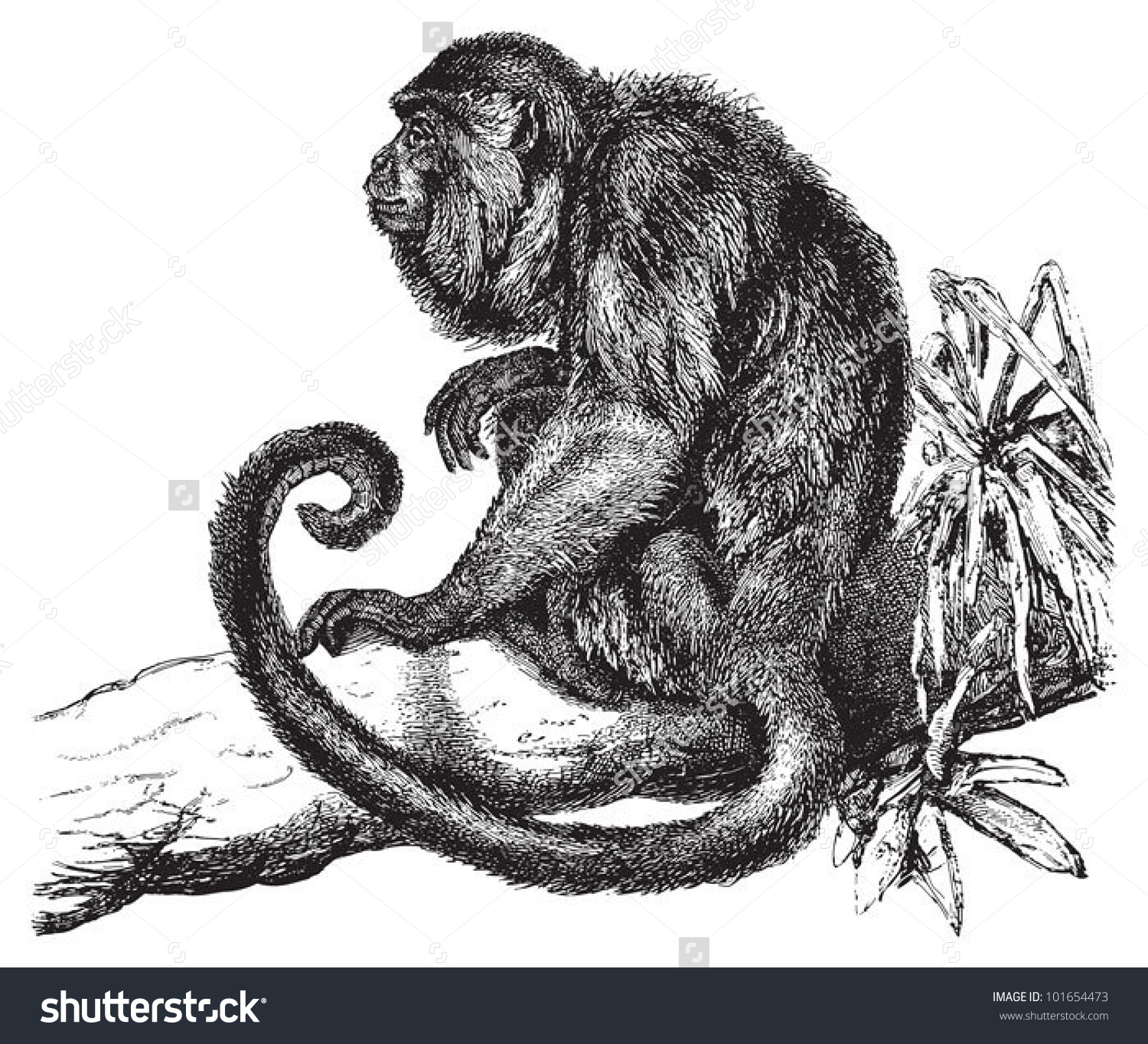 Howler Monkey clipart #2, Download drawings