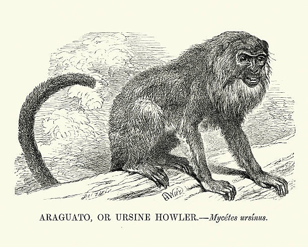 Howler Monkey clipart #4, Download drawings