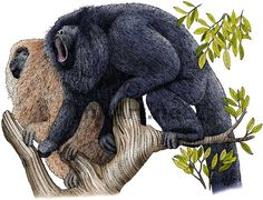 Howler Monkey clipart #9, Download drawings