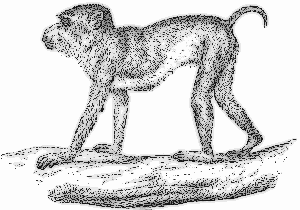 Howler Monkey clipart #19, Download drawings