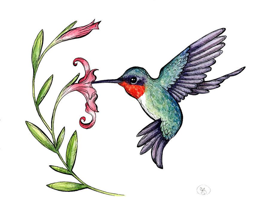 Hummingbird clipart #19, Download drawings