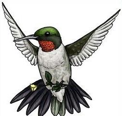 Hummingbird clipart #16, Download drawings