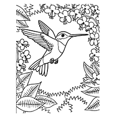 Hummingbird coloring #9, Download drawings