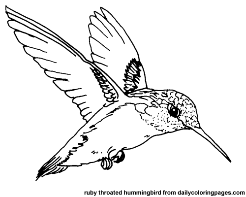 Hummingbird coloring #15, Download drawings