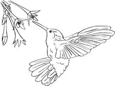 Hummingbird coloring #3, Download drawings