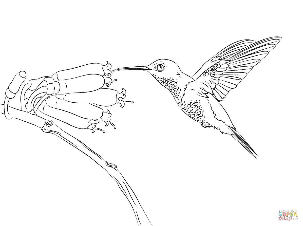 Hummingbird coloring #10, Download drawings