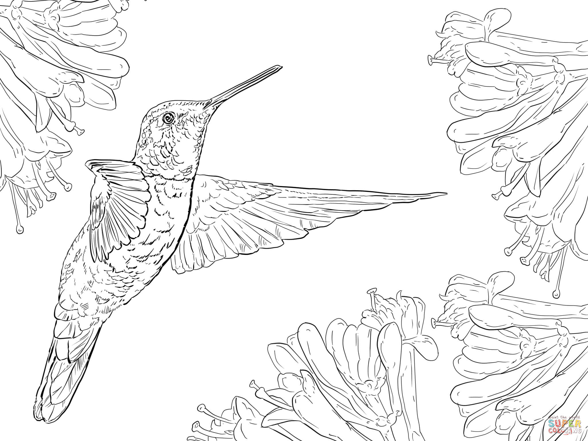 Hummingbird coloring #8, Download drawings