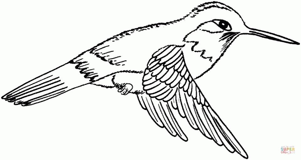 Hummingbird coloring #12, Download drawings