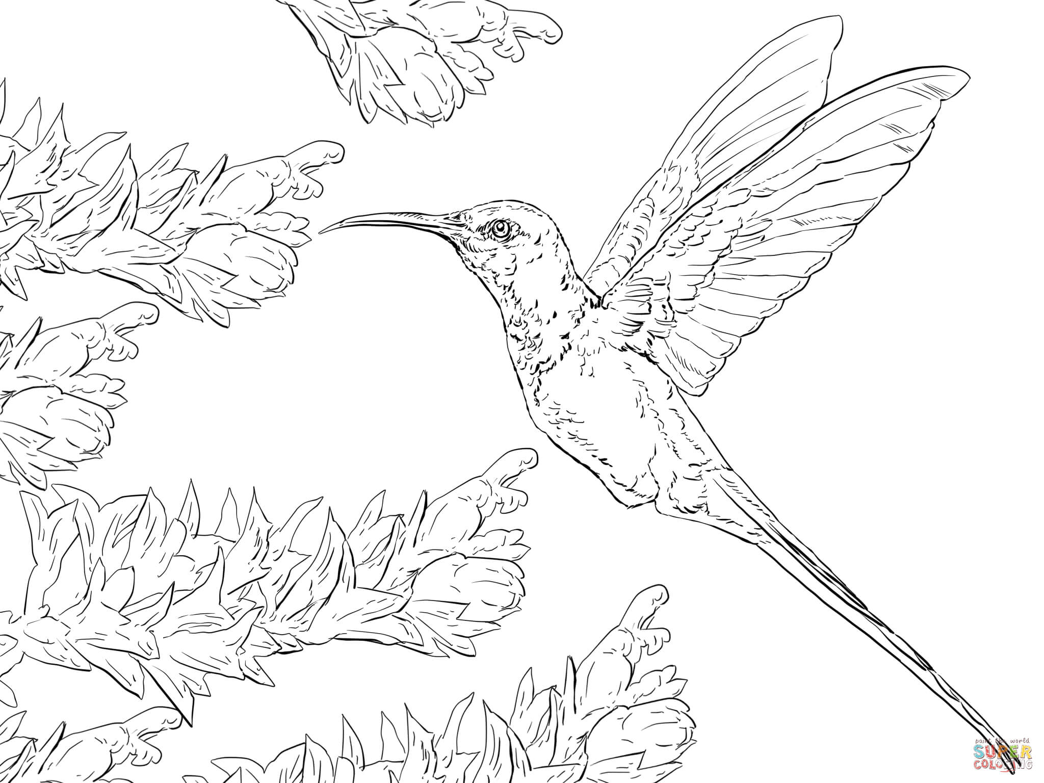 Hummingbird coloring #7, Download drawings