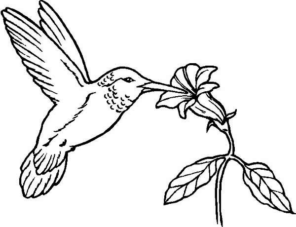Hummingbird coloring #19, Download drawings