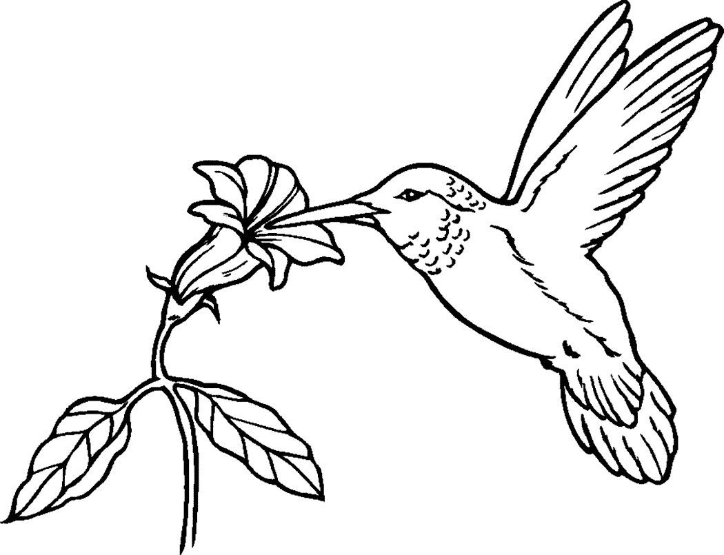 Hummingbird coloring #4, Download drawings