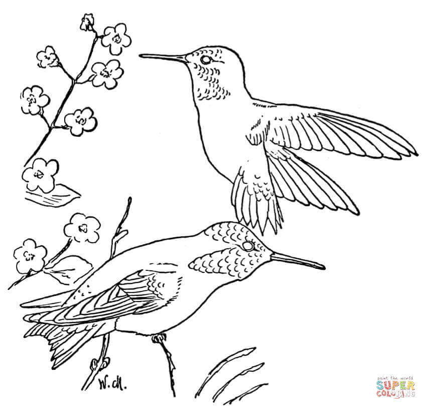 Hummingbird coloring #13, Download drawings