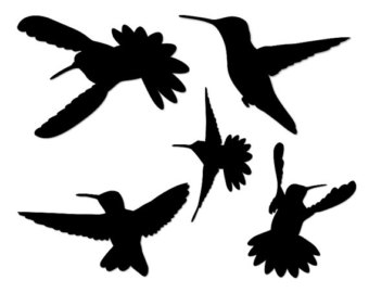 Swallow-tailed Hummingbird svg #13, Download drawings