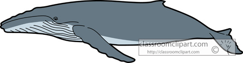 Humpback Whale clipart #15, Download drawings