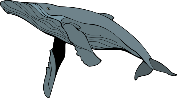 Humpback Whale clipart #14, Download drawings