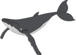 Humpback Whale clipart #19, Download drawings
