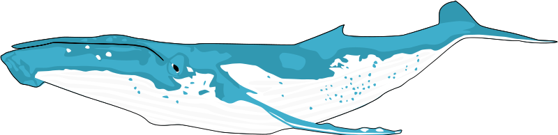 Humpback Whale clipart #6, Download drawings