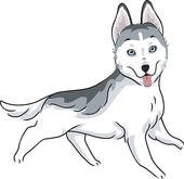 Husky clipart #15, Download drawings