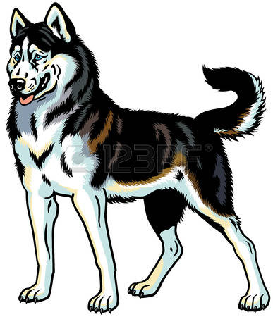 Husky clipart #9, Download drawings