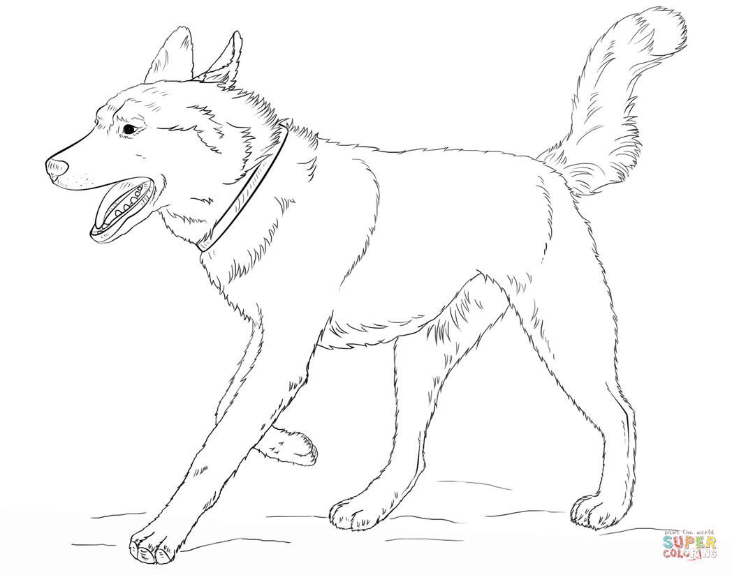Husky coloring #7, Download drawings