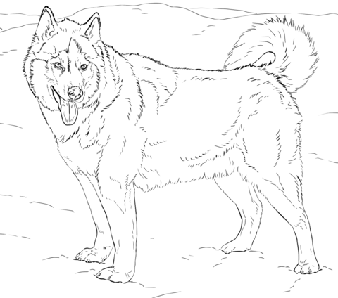 Husky coloring #17, Download drawings