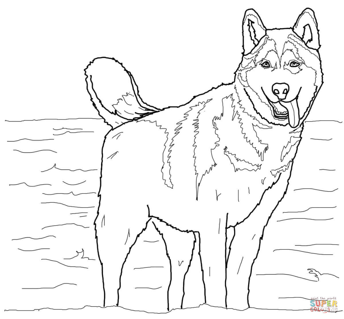 Husky coloring #11, Download drawings